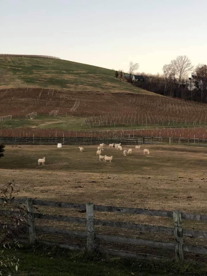 Winery in VA